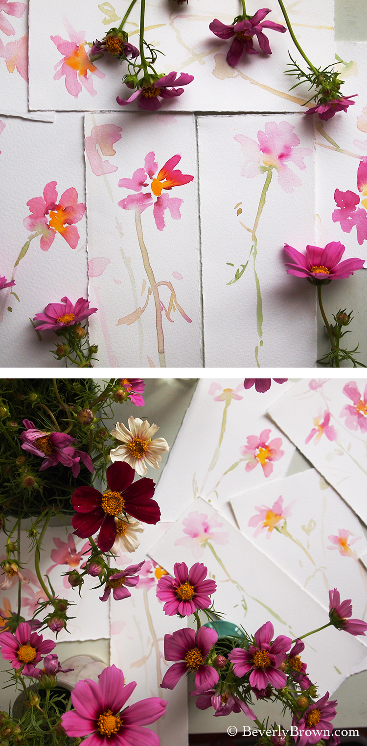 cosmos flower sketches by Beverly Brown