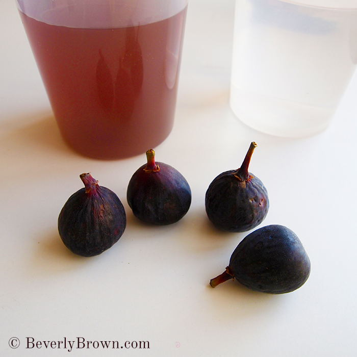 figs - watercolor painting studio Beverly Brown
